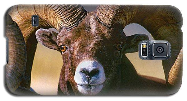 Trophy Bighorn Ram Galaxy S5 Case