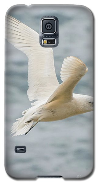 Tropic Bird 2 Galaxy S5 Case by Werner Padarin