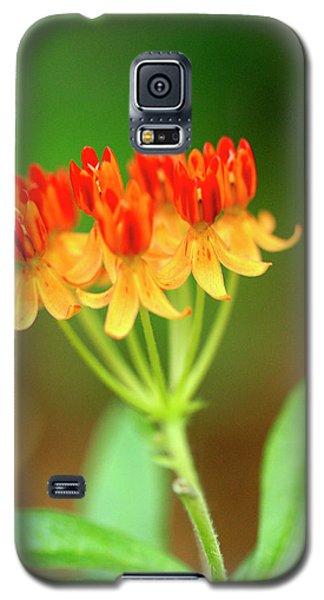Tropical Milkweed Galaxy S5 Case