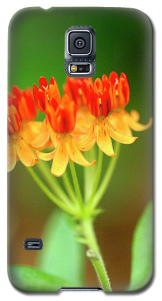 Tropical Milkweed Galaxy S5 Case