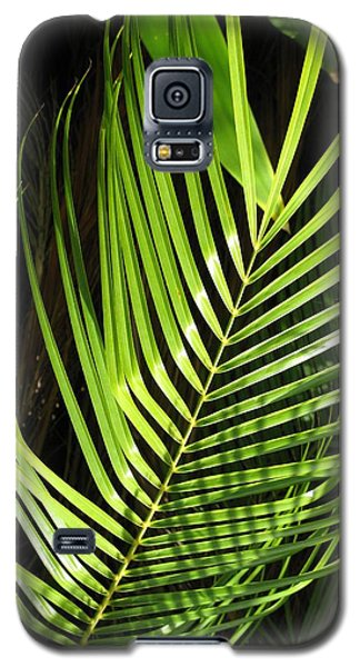 Galaxy S5 Case featuring the photograph Tropical Palm by Carol Sweetwood