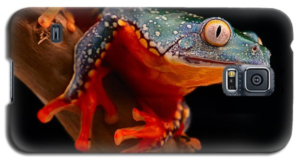 tropical tree frog Cruziohyla craspedotus Galaxy S5 Case by Dirk Ercken