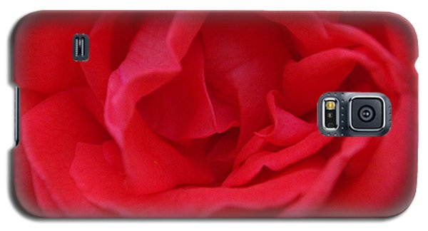Tropicana Rose Galaxy S5 Case by Robyn Stacey
