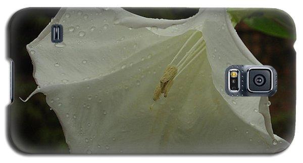 Trumpet In The Rain Galaxy S5 Case
