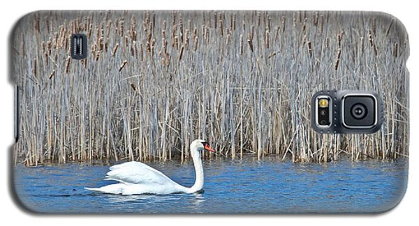 Trumpeter Swan 0967 Galaxy S5 Case by Michael Peychich