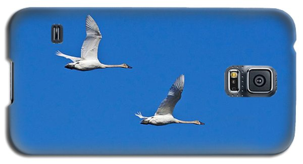 Trumpeter Swan 1727 Galaxy S5 Case by Michael Peychich