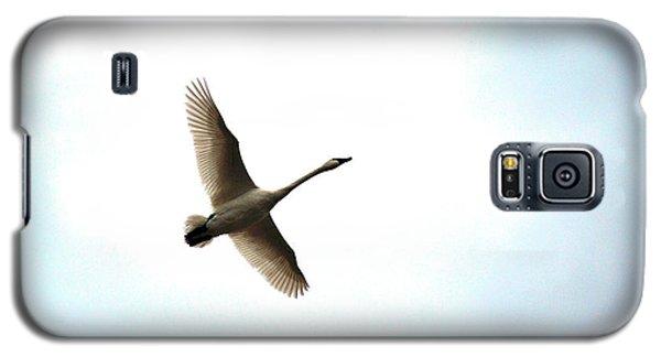 Trumpeter Swan In Flight Galaxy S5 Case