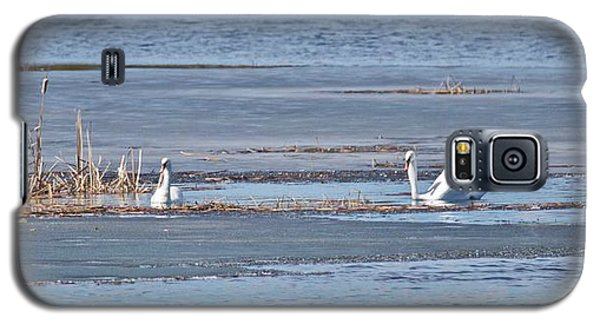 Trumpeter Swans 0933 Galaxy S5 Case by Michael Peychich