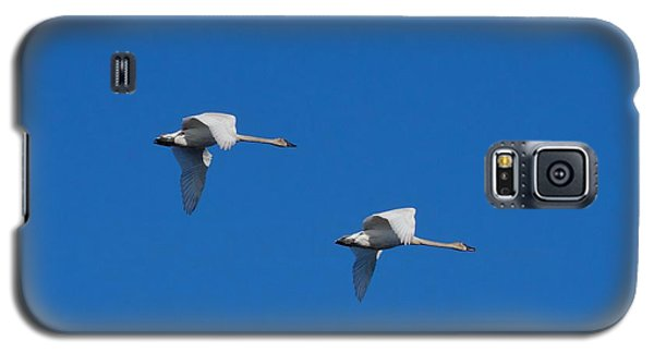 Trumpeter Swans 1725 Galaxy S5 Case by Michael Peychich
