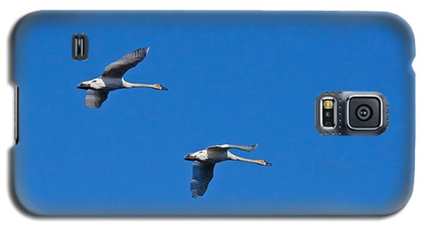 Trumpeter Swans 1726 Galaxy S5 Case by Michael Peychich