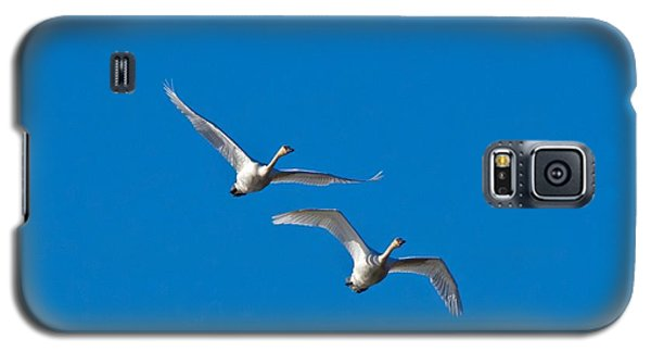 Trumpeter Swans 1735 Galaxy S5 Case by Michael Peychich