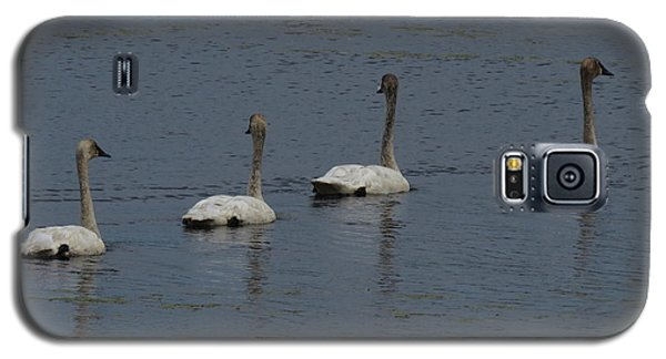 Trumpeter Swans Galaxy S5 Case by Sandra LaFaut