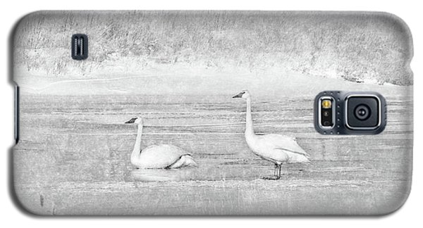 Galaxy S5 Case featuring the photograph Trumpeter Swan's Winter Rest Gray by Jennie Marie Schell