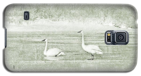 Galaxy S5 Case featuring the photograph Trumpeter Swan's Winter Rest Green by Jennie Marie Schell