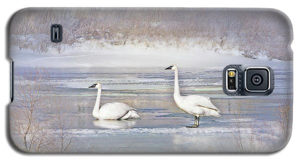 Galaxy S5 Case featuring the photograph Trumpeter Swan's Winter Rest by Jennie Marie Schell