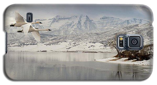 Trumpeter Swans Wintering At Deer Creek Galaxy S5 Case