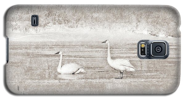 Galaxy S5 Case featuring the photograph Trumpeter Swan's Winter Rest Beige by Jennie Marie Schell