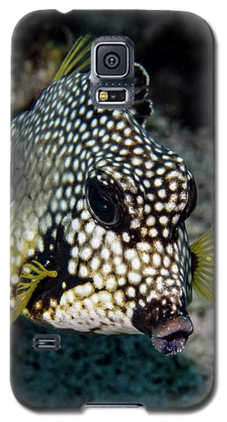 Galaxy S5 Case featuring the photograph Trunkfish Portrait by Jean Noren