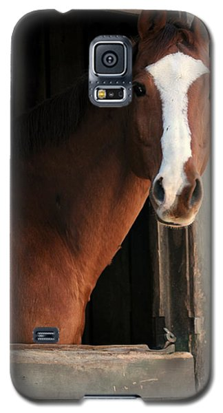 Galaxy S5 Case featuring the photograph T's Window by Angela Rath