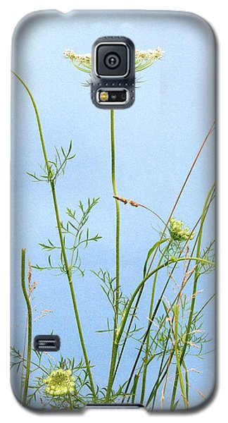 Tuft Of Queen Anne's Lace Galaxy S5 Case