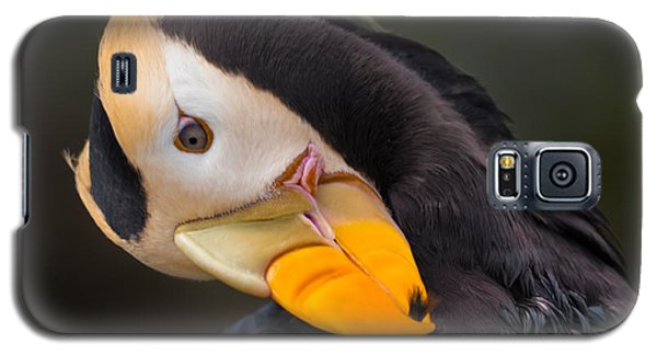 Tufted Puffin Preening Galaxy S5 Case