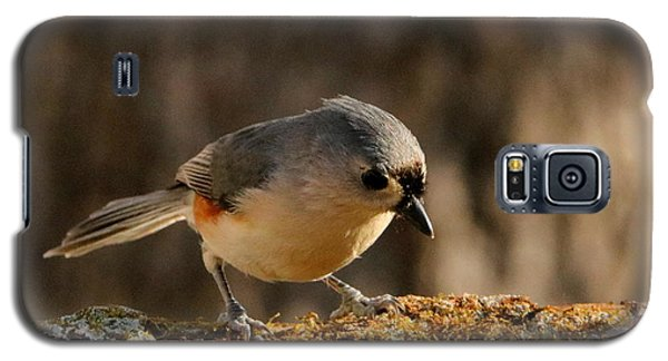 Tufted Titmouse In Fall Galaxy S5 Case
