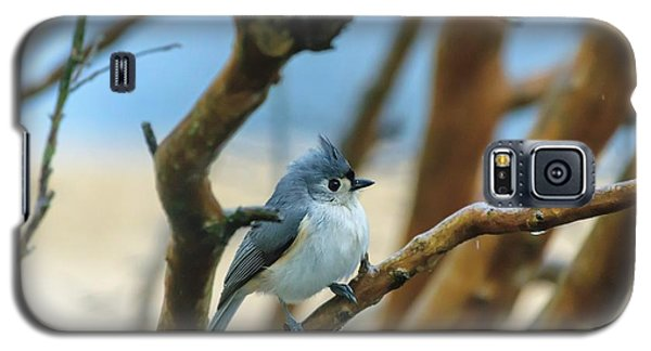 Tufted Titmouse In Tree Galaxy S5 Case