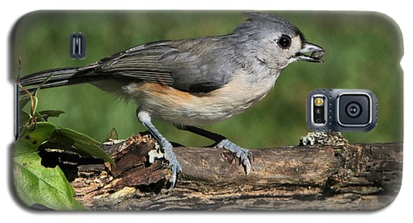 Tufted Titmouse On Tree Branch Galaxy S5 Case