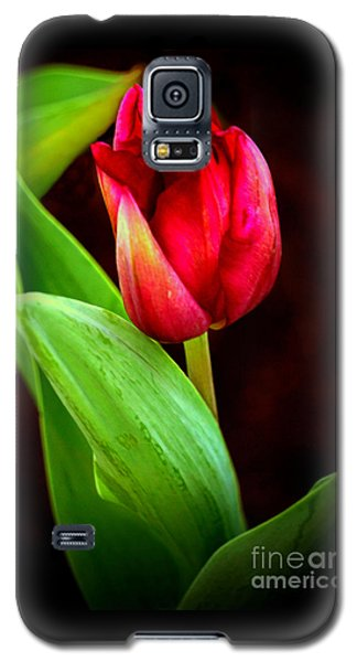 Tulip Caught In The Light Galaxy S5 Case