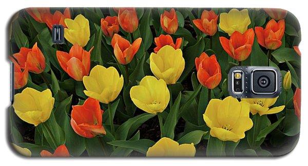 Tulip Chorus Galaxy S5 Case