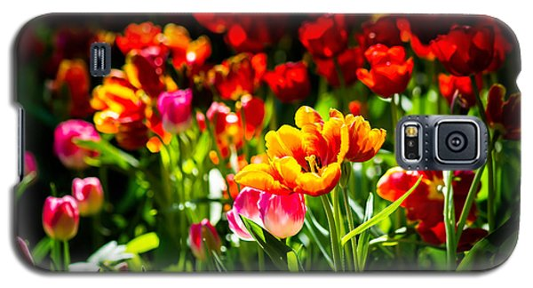 Galaxy S5 Case featuring the photograph Tulip Flower Beauty by Alexander Senin