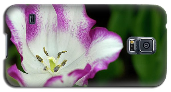 Tulip Flower Galaxy S5 Case
