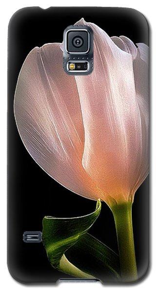 Tulip In Light Galaxy S5 Case
