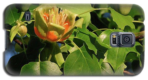 Tulip Poplar Galaxy S5 Case