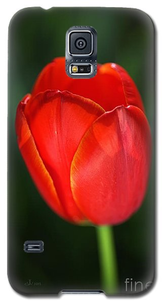 Tulip Red With A Hint Of Yellow Galaxy S5 Case