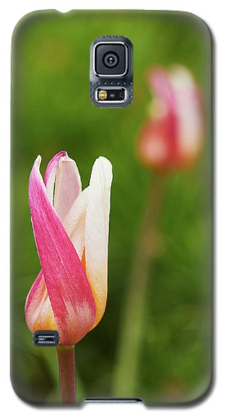 Tulip Time Galaxy S5 Case