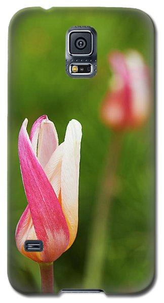 Tulip Time Galaxy S5 Case