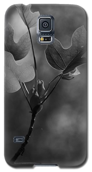 Tulip Tree Leaves In Spring Galaxy S5 Case