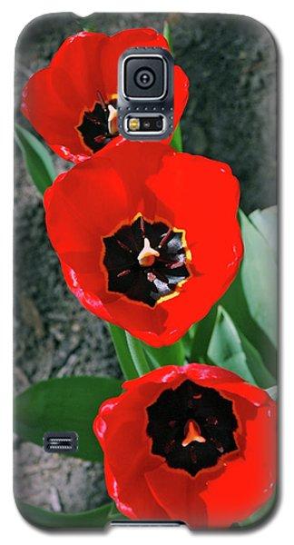 Galaxy S5 Case featuring the photograph Tulip Trio by LeeAnn McLaneGoetz McLaneGoetzStudioLLCcom