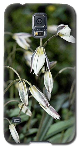 Tulipa Turkestanica Galaxy S5 Case