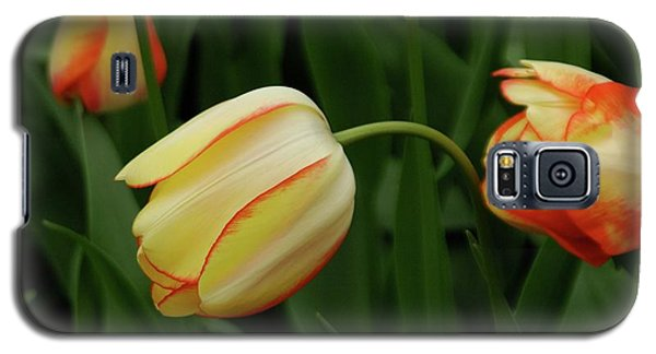 Nodding Tulips Galaxy S5 Case