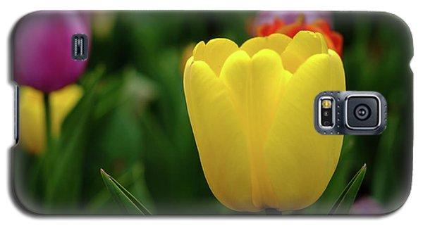 Tulips At Campus Galaxy S5 Case