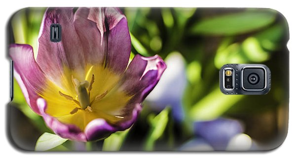 Tulips At The End Galaxy S5 Case