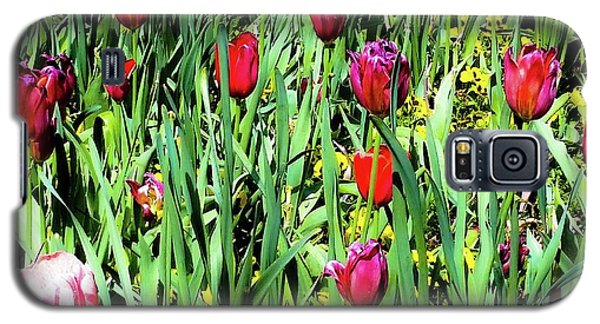 Tulips Blooming Galaxy S5 Case