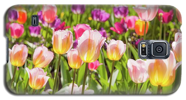 Tulips  Galaxy S5 Case