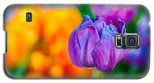 Galaxy S5 Case featuring the photograph Tulips Enchanting 46 by Alexander Senin