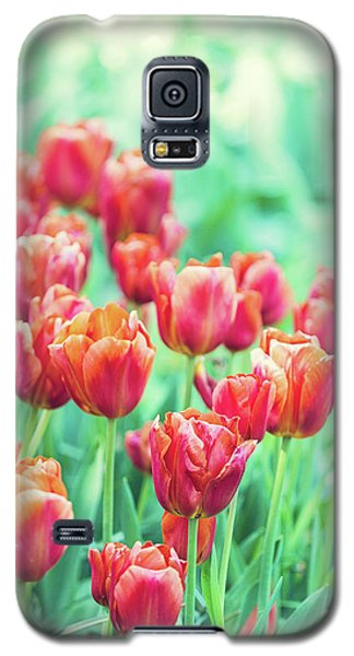 Tulips In Amsterdam Galaxy S5 Case