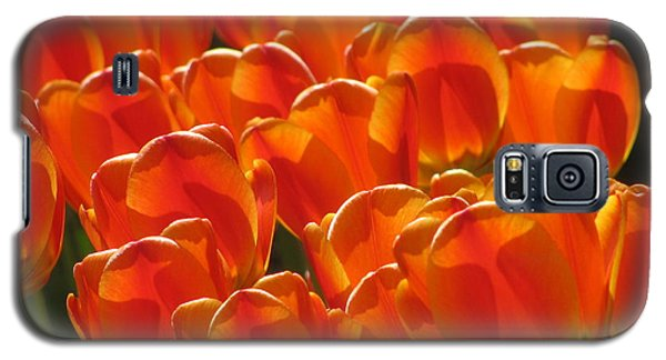 Tulips In Light Galaxy S5 Case