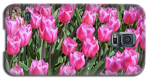 Galaxy S5 Case featuring the photograph Tulips In Pink Color by Patricia Hofmeester