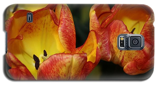 Tulips In The Morning Galaxy S5 Case